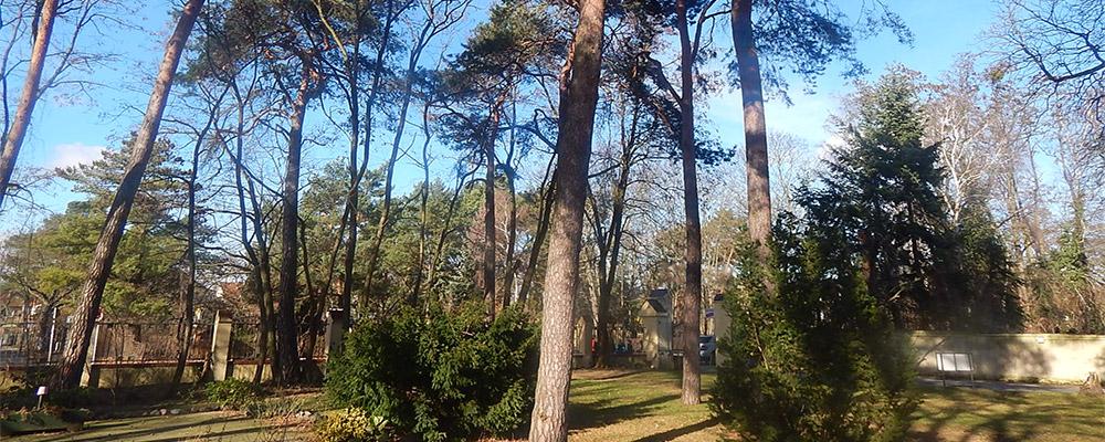 Unser Garten mit Baumbestand